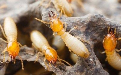 Top 10 Termite Control Tips