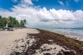 tulum_beach_windy_seaweed