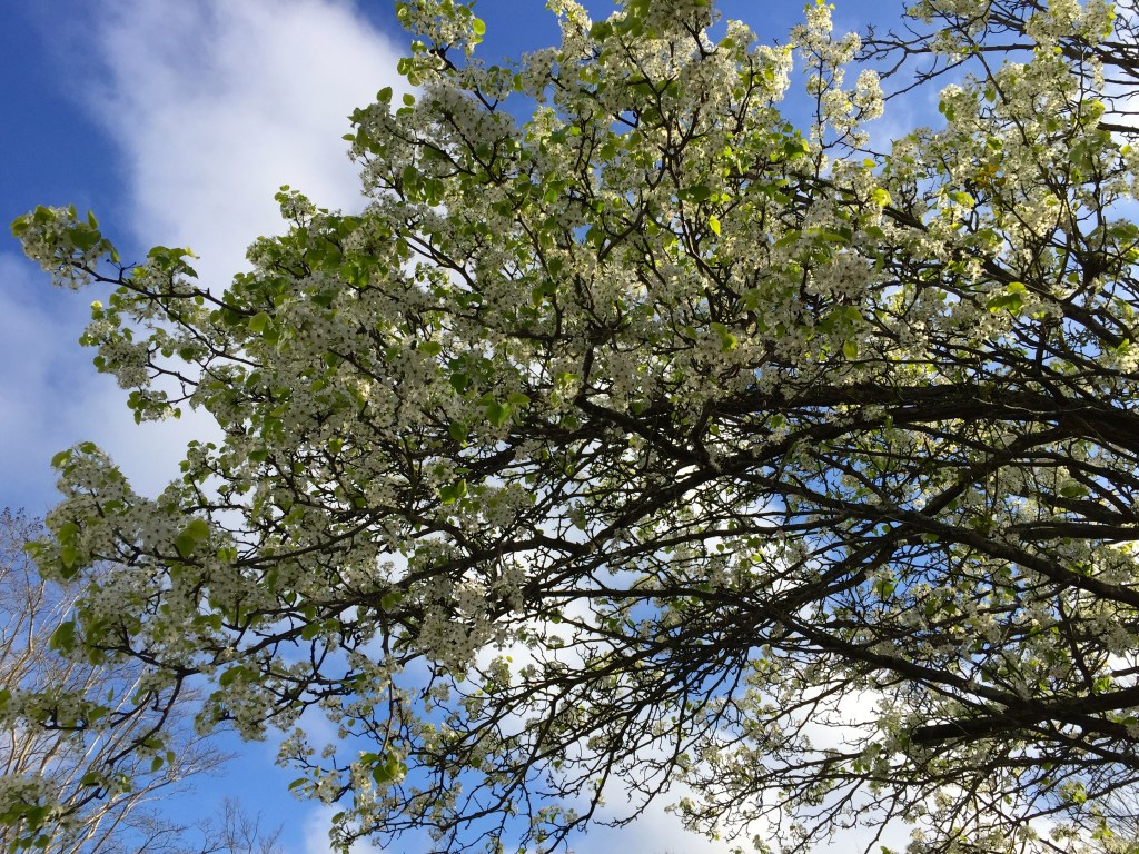 Spring break in New Orleans - lovely flowering trees and blue skies overhead