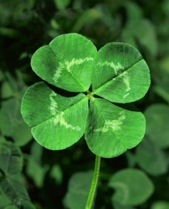 15 reasons to celebrate the color green on Saint Patrick's Day: 4-leaf clover