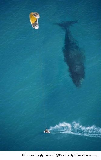 Ridiculous Fears: Kite surfing with whale below