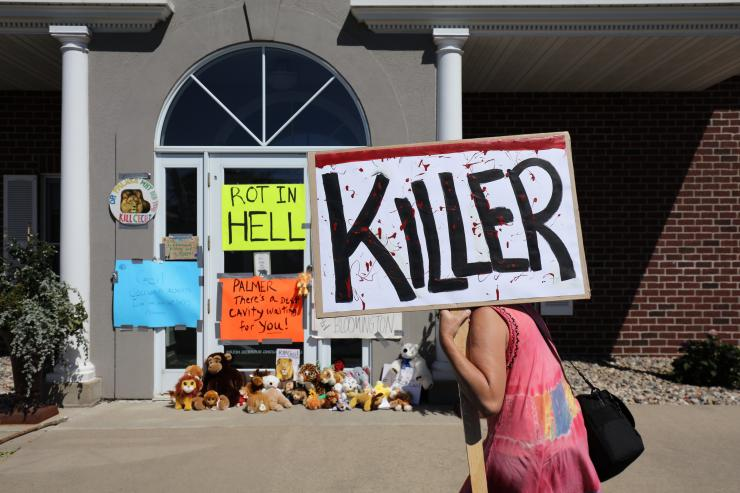 The Lion Hunter Becomes the Hunted: Palmer's practice littered with stuffed animals and signs inviting him to rot in hell.