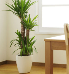 Inside Office Plants 2