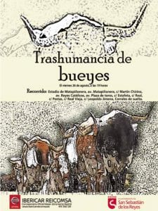 Fiestas en honor del Santísimo Cristo de los Remedios 2016   San Sebastián de los Reyes   Comunidad de Madrid   Transhumancia de bueyes