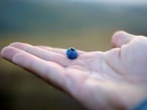 En el arándano azul encontrarás un aliado 'natural' contra la diabetes | Nutrición sin más