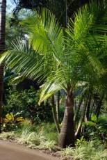 Palm Short