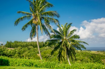 Coconuts? We got em.
