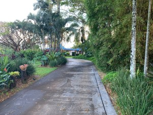 Mature gardens flank the driveway