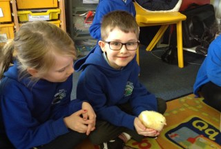 The chicks visit Year 1