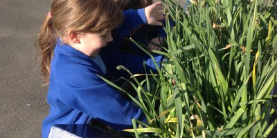 Hunting for Eggs in Year 2!