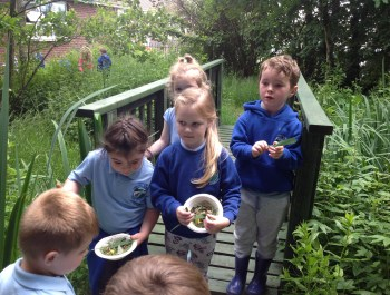 Finding out about Habitats