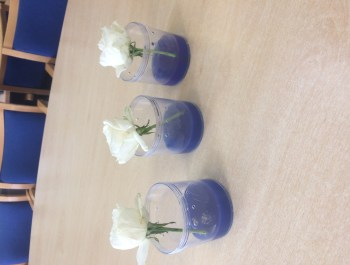Year 3 Rose Experiment Underway!
