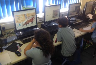 Woodland Animal Research