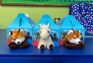 Animal Adoptions in KS2