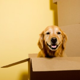 Things to consider when moving with a pet