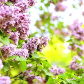 Health tips for moving in the spring
