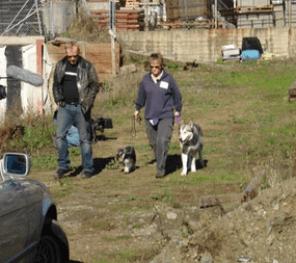 The Pooch Coach on MythBusters Dog Myths