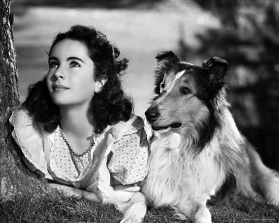 """Elizabeth Taylor and Lassie"""