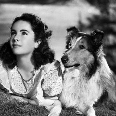 """""""Elizabeth Taylor and Lassie"""""""