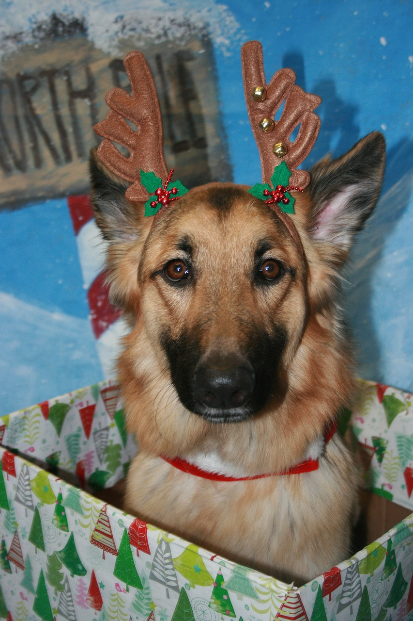 Questions Regarding 'Tipping' Your Pet Sitter During The Holidays, Etc.-Blog Post 2