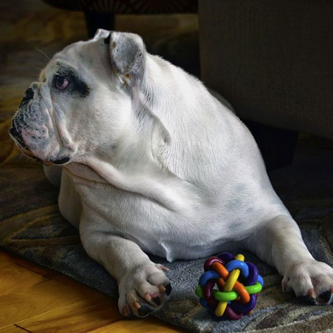 tips on how to choose the right toy for your dog