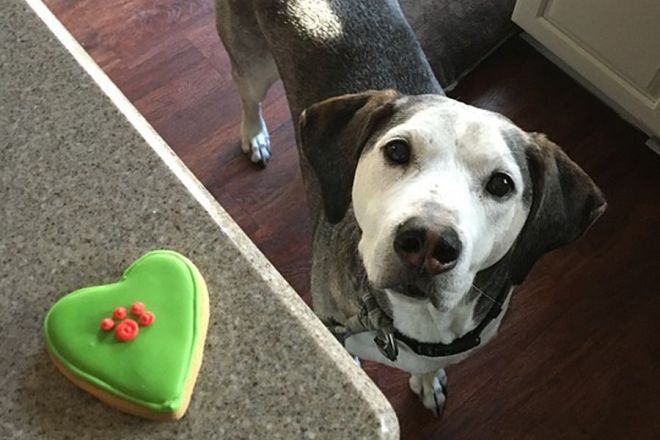 easy homemade treats for dogs