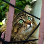 tips for adopting a recue cat
