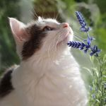 tips to keep your cat healthy