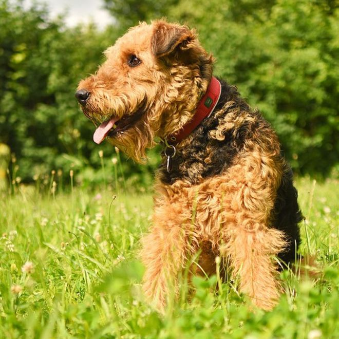 the best dog breeds for hot weather