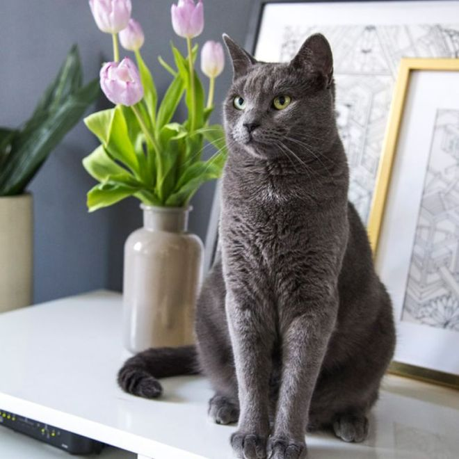 cat friendly flowers for your home