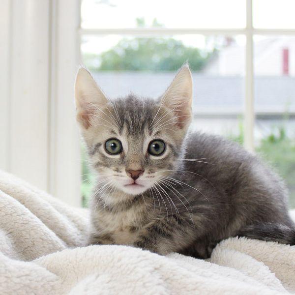 how to litter train new kittens