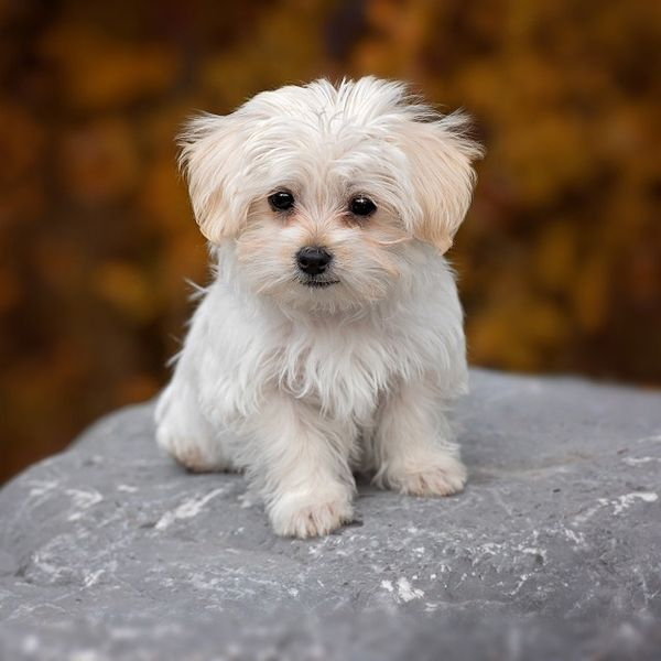 tiny dog names for your small dog
