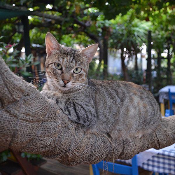 Greek Mythology Cat Names for male cats