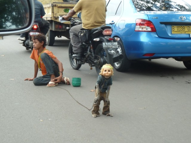 Monkey in Doll's head
