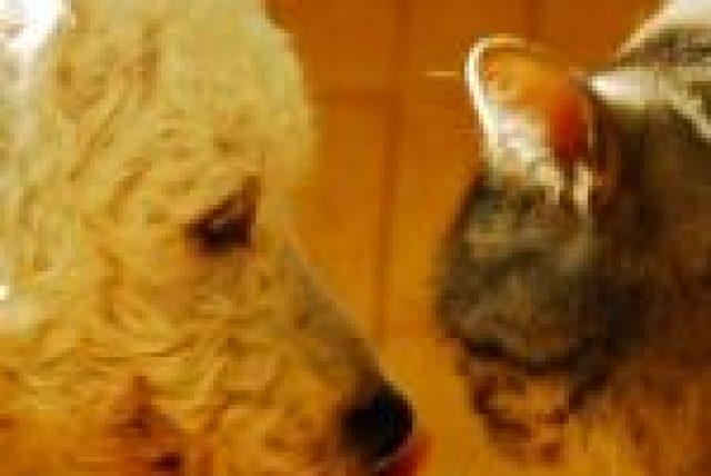 truro nova scotia Dog Walker, Truro nova Scotia Cat Sitter, Truro Nova Scotia Pet Sitter, Truro Nova Scotia Poo removal