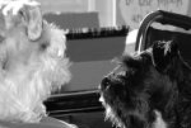 schnauzer sitter and pet photographer, Truro dog walker, poo wizard