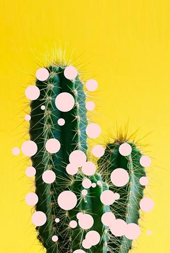 mood-cactus_57