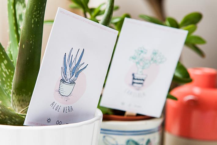 DIY-Printables-etiquettes-plantes3