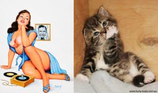 Cats that look like pinups (2)