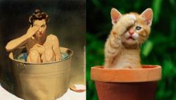 Cats that look like pinups (7)