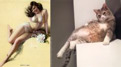 Cats that look like pinups (9)