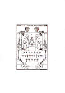 Anatomy-news