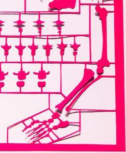 Anatomy pink - detail3