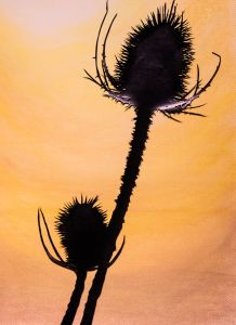 Solo Teasel -detail1