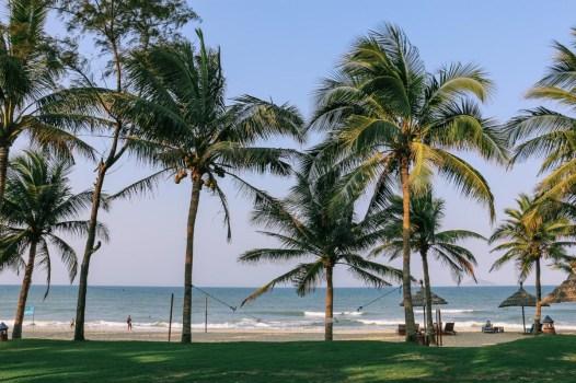 Palm Garden-11