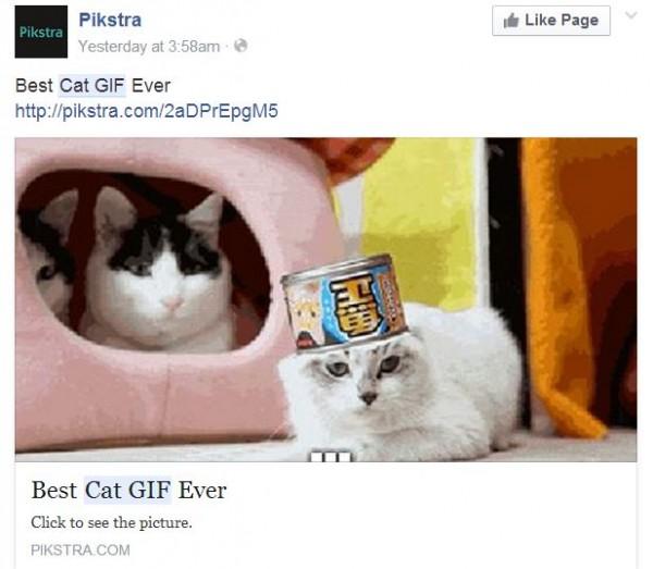 cat-GIF