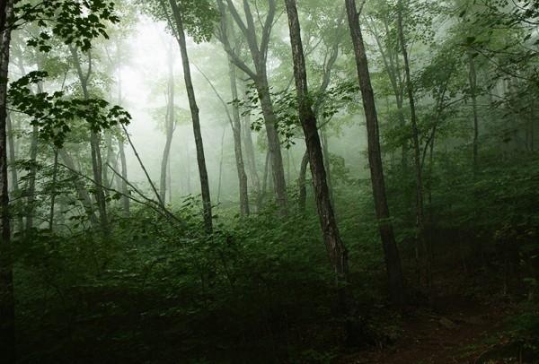 vermont_woods_by_blackroomphoto-d5dx113