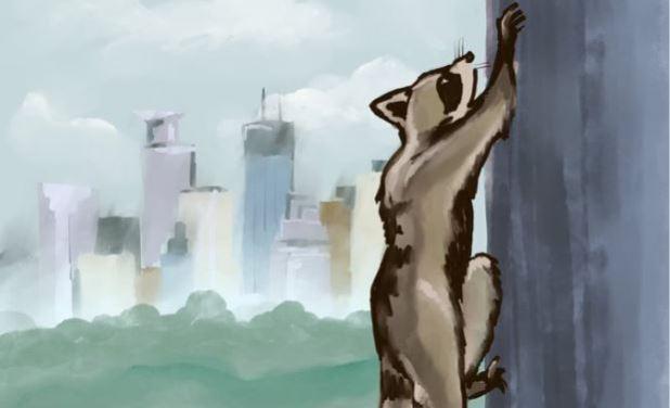 mpr raccoon fan art