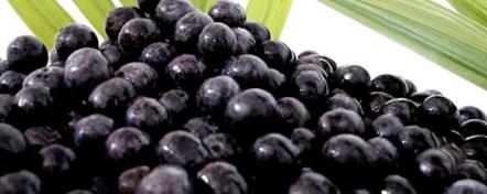 L'acai è un frutto che si trova nella foresta amazzonica.