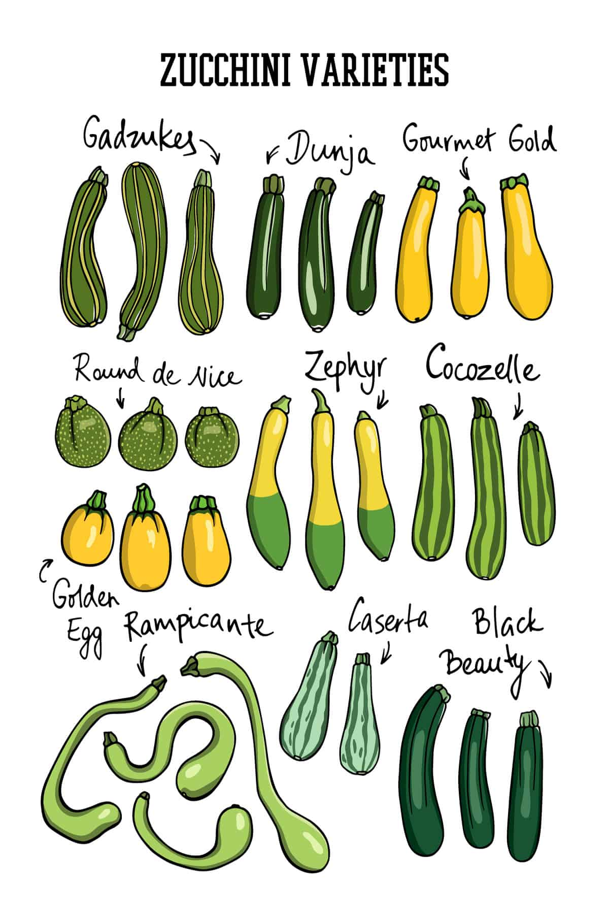 14 Different Types of Zucchini for All Kinds of Dishes